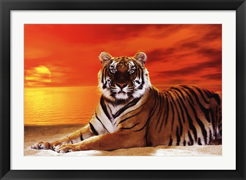 Framed Tiger - sunset Print