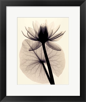 Framed Tropical Water Lily Print