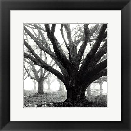 Framed Oak Grove, Winter Print