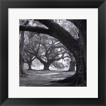 Framed Oak Alley, West Row Print