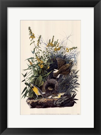 Framed Eastern Meadowlark Print