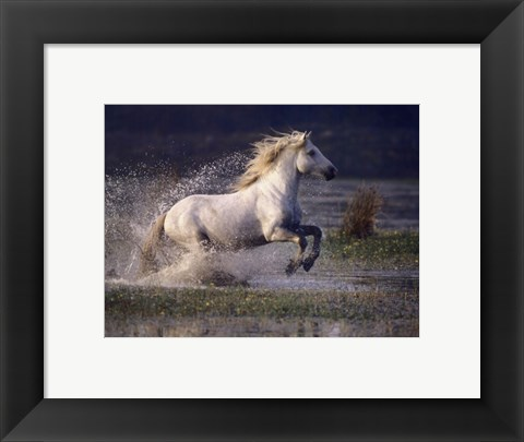 Framed Aquatic Gallop Print