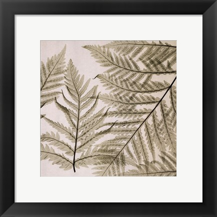 Framed Ferns I Print