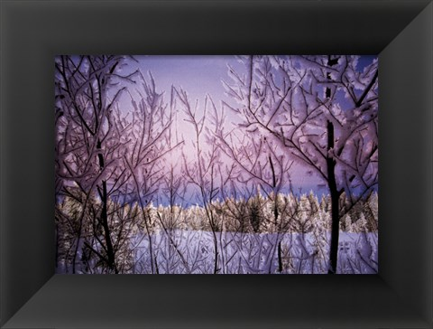 Framed Change - Snowy Trees Print