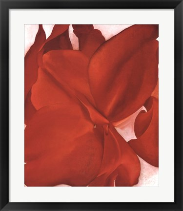 Framed Red Cannas Print