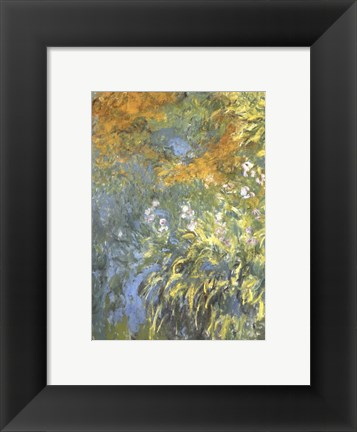 Framed Yellow Iris Print