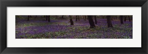 Framed Nature's Color - Purple Flowers Print
