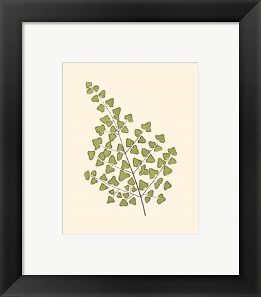 Framed Woodland Ferns II Print