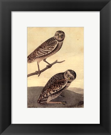 Framed Burrowing Day-Owl Print