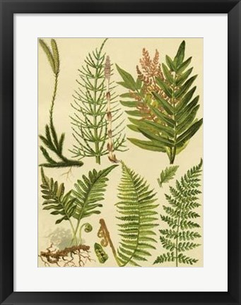 Framed Fern Collection II Print