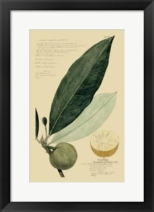 Framed Descubes Tropical Fruits III Print