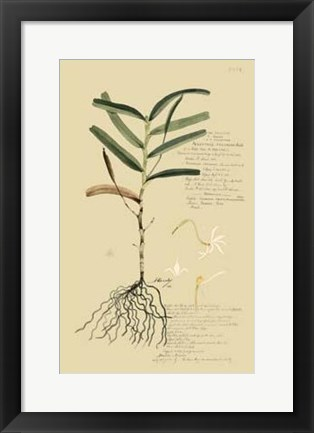 Framed Descubes Tropical Grasses II Print