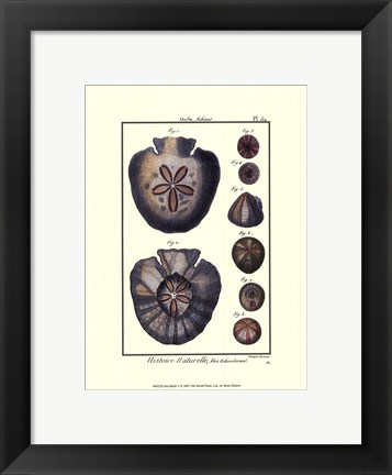 Framed Sea Shells V Print