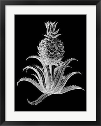 Framed Pineapple Noir II Print