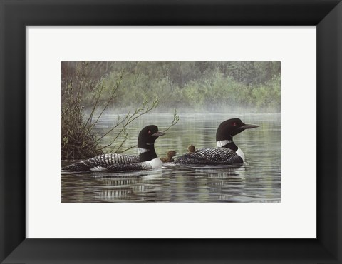 Framed Northern Reflections - Loons Print