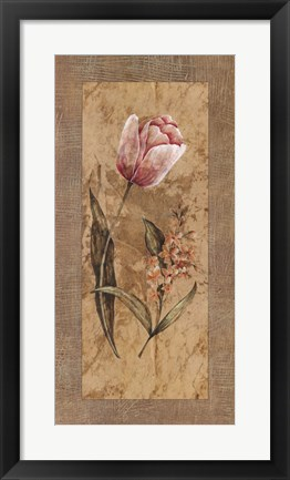 Framed Antique Tulip Print