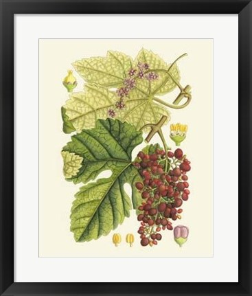 Framed Crimson Berries III Print