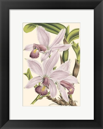 Framed Mini Delicate Orchid I Print