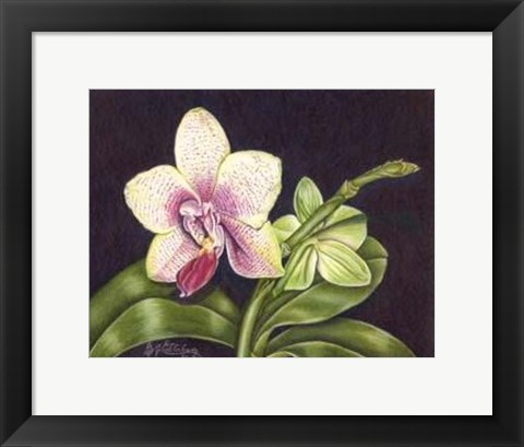 Framed Vibrant Orchid II Print