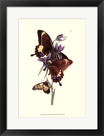 Framed Butterflies and Flora III Print