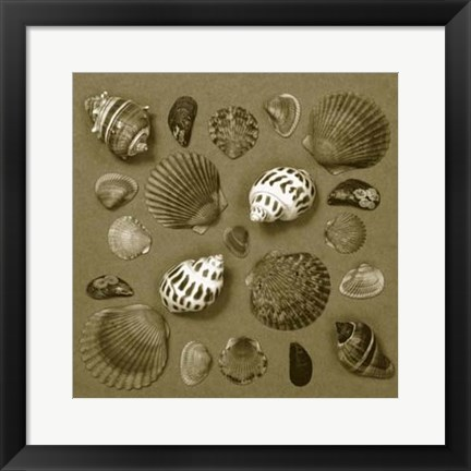 Framed Shell Collector Series V Print