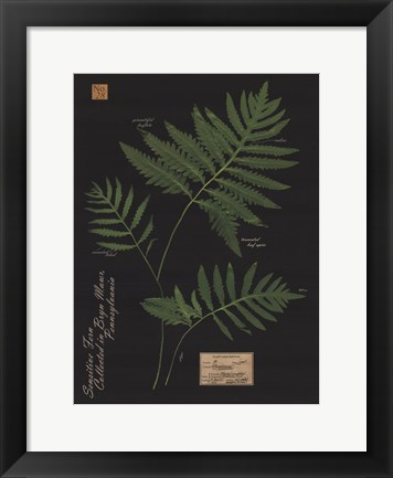 Framed Sensitive Fern Print