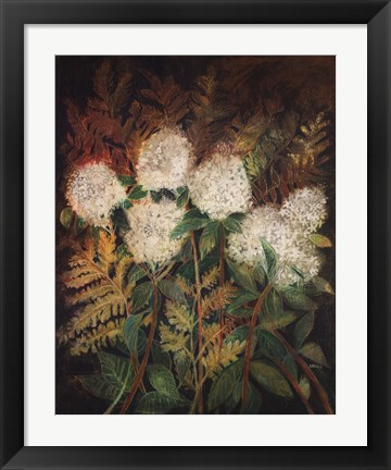 Framed Hydrangeas and Ferns Print