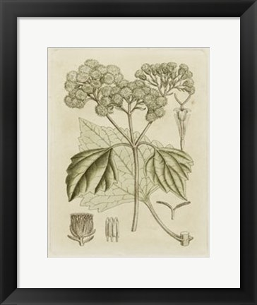 Framed Tinted Botanical IV Print