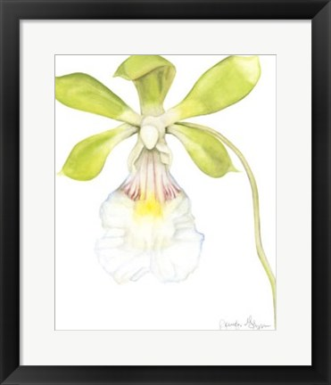 Framed Orchid Beauty I Print