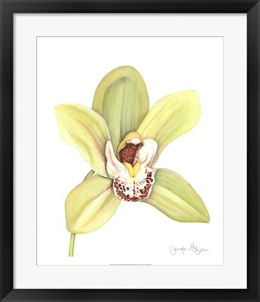 Framed Orchid Beauty II Print