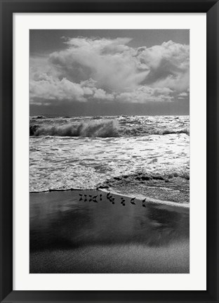 Framed Shorebirds, Point Reyes Print