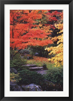 Framed Fall Solitude Print