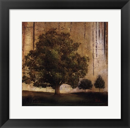 Framed Aged Tree II Print