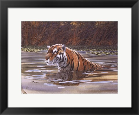 Framed Bengal Tiger Print