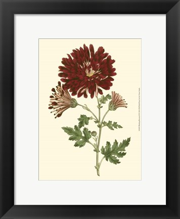 Framed Blushing Blossoms III Print