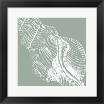 Framed Seabreeze Shells III (P) Print