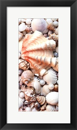 Framed Shell Menagerie I Print