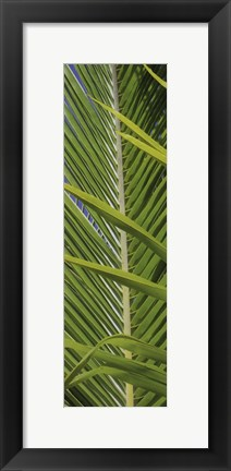 Framed Palm Collection V Print