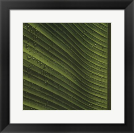 Framed Perfect Leaf I Print