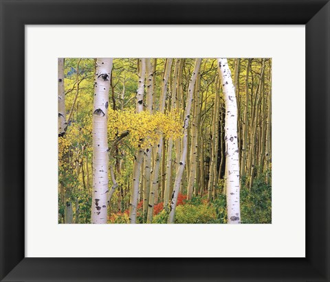Framed Aspen Abstract Journal Print