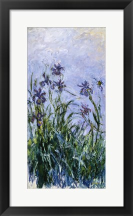 Framed Purple Irises, 1914-17 Print
