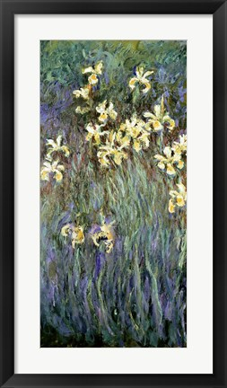 Framed Yellow Irises Print