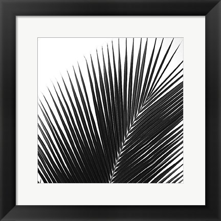 Framed Palms 14 (detail) Print