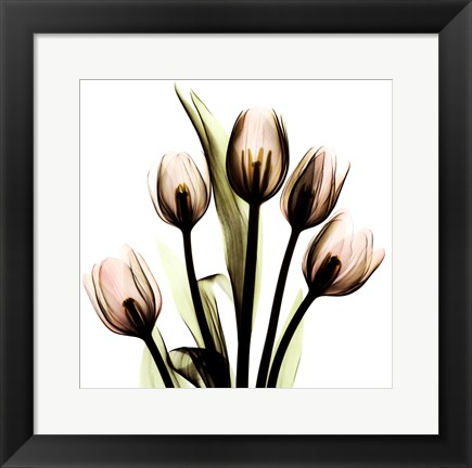 Framed Crystal Flowers X-Ray, Tulip Bouquet Print