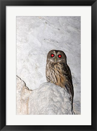 Framed Mottled owl Print