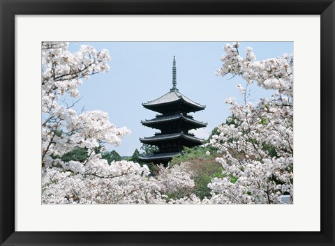 Framed Cherry Blossoms Ninna-Ji Temple Grounds Kyoto Japan Print