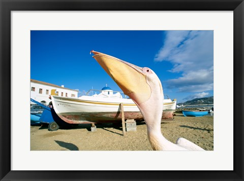 Framed Pelican and Fishing Boats on Beach, Mykonos, Cyclades Islands, Greece Print
