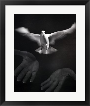 Framed Close-up of a person releasing a White Dove Print