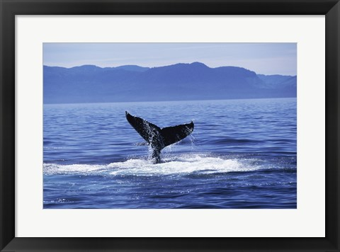 Framed Tail fin of a Humpback Whale in the sea, Alaska, USA Print