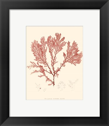Framed Nature Print in Coral IV Print